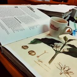 Как да разберем защо кафето е киселинно или горчиво от гледна точка на Арабика и Робуста ?